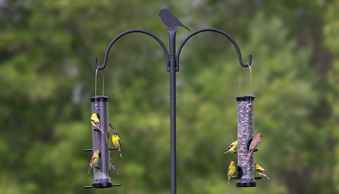 Two Bird Feeders