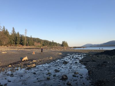 Hanging with Dogs on Rotary Beach